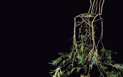 Stoelen groeien aan bomen